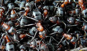 Mravenci váží víc než celé lidstvo