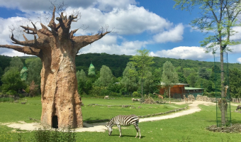 Baobab, aneb jak se žije ve stromu?