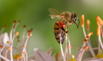 Bez včel by skončil život na zemi
