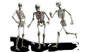Počet kostí v lidském těle se během života mění
