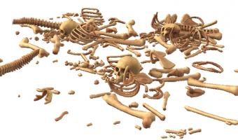 Nejmenší kost v lidském těle měří pouhé 3 milimetry